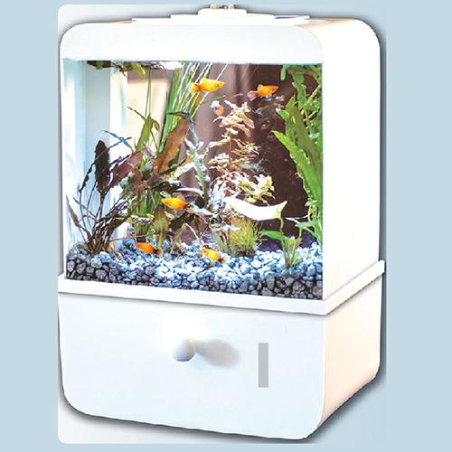 FISHTASTIC 5 Gallon Acrylic Aquarium