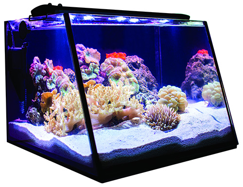 Lifegard Full-View 5 Gallon Aquarium Complete