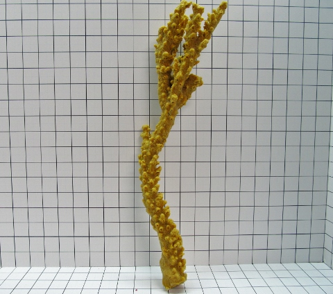 Large Straight Branch Coral Decoration #127