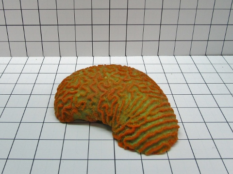 Medium Brain Coral Decoration #310