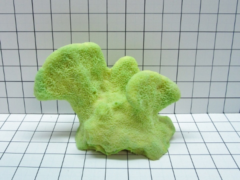 Large Fat Cat's Paw Coral Decoration #716