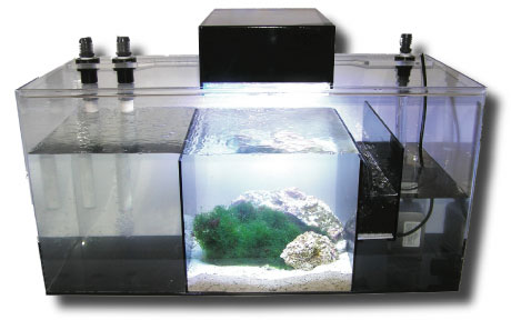 ADHI Model 20 Refugium - FREE GROUND SHIPPING!*