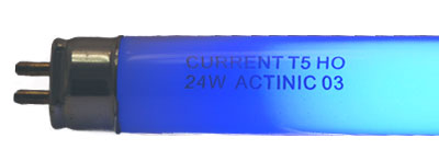 "Current 24"" 24w T5 HO 420nm Actinic Lamp"