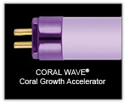 "Wave Point 36"" 39w  Coral Wave Coral Growth Accelerator T5 Lamp"