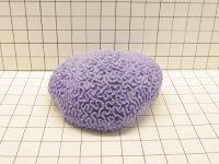 Large Worm Brain Coral Decoration #311